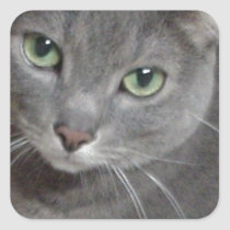 Russian Blue Gray Cat Square Sticker