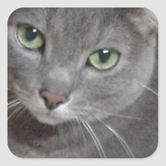 Russian Blue Gray Cat Stickers
