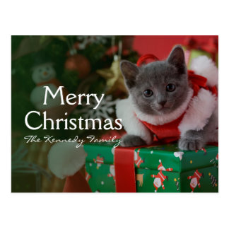 Russian Blue Kitten and Christmas Postcard