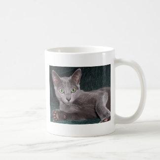 Russian Blue Kitten Mugs