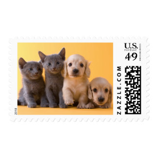 Russian Blue Kittens And Dachshund Puppies Postage