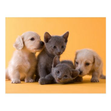Toddler & Baby themed Russian Blue Kittens & Dachshund Puppies Postcard