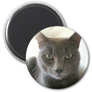 Russian Blue Mix 2 Inch Round Magnet