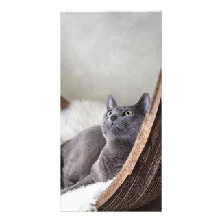 Russian Blue Customized Photo Card