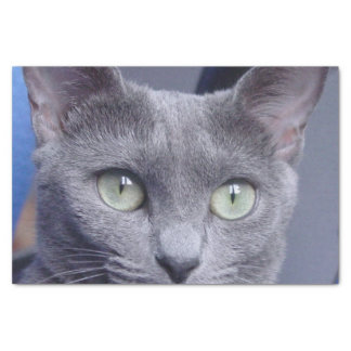 "russian-blue.png 10"" x 15"" tissue paper"