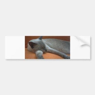 Russian_blue sleeping bumper sticker