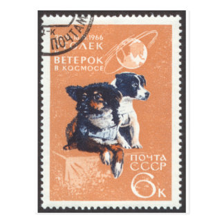 Russian Space Dogs 1966 Cosmos 110 Postcard