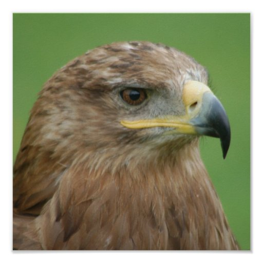 Russian Steppe Eagle Poster