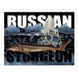 Russian Sturgeon Postcard