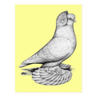 Russian Tumbler Pigeon Postcard