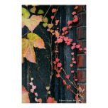 Rustic Autumn Vines Against An Old Building 4 Print
