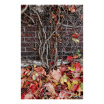 Rustic Autumn Vines Against An Old Building 5 Print