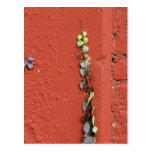 Rustic Autumn Vines Against An Old Building Card Post Cards