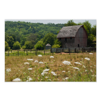 Rustic Barn and Queen Anne's Lace Poster Print