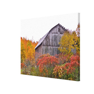 RUSTIC BARN SURROUNDED BY FALL COLOR CANVAS PRINT