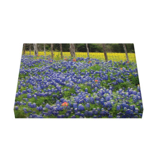 Rustic Bluebonnets Canvas Print