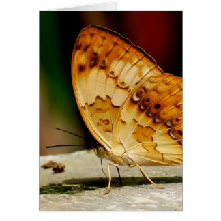 Rustic Brush Footed Butterfly Card