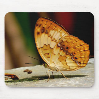 Rustic Brush Footed Butterfly Mouse Pad