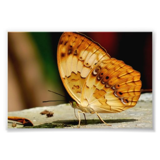 Rustic Brush Footed Butterfly Photo Art