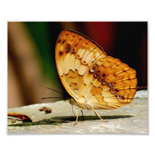 Rustic Brush Footed Butterfly Photo Print