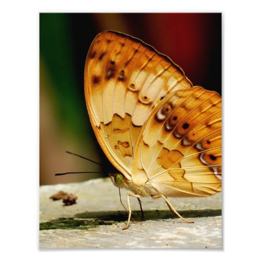 Rustic Brush Footed Butterfly Photograph