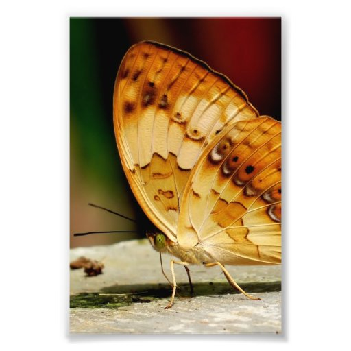 Rustic Brush Footed Butterfly Art Photo