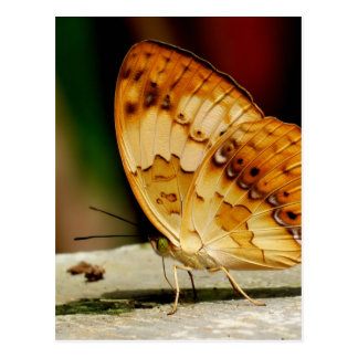 Rustic Brush Footed Butterfly Postcard