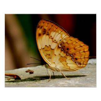 Rustic Brush Footed Butterfly Poster