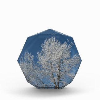 Rustic country blue sky snow scene  winter trees award