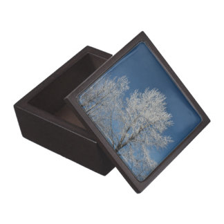 Rustic country blue sky snow scene  winter trees gift box