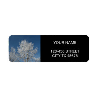 Rustic country blue sky snow scene  winter trees label