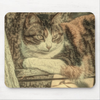 Rustic country cat lover farmhouse calico cat mouse pad