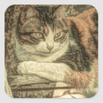 Rustic country cat lover farmhouse calico cat square sticker