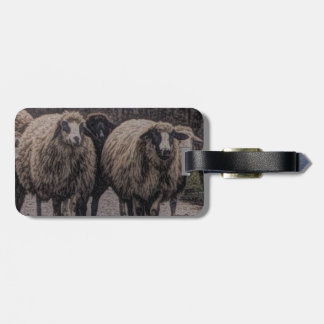 Rustic country road ranch farm herd of sheep bag tag