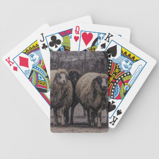Rustic country road ranch farm herd of sheep bicycle playing cards