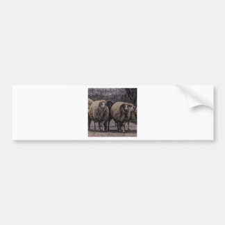 Rustic country road ranch farm herd of sheep bumper sticker