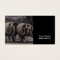 Rustic country road ranch farm herd of sheep business card