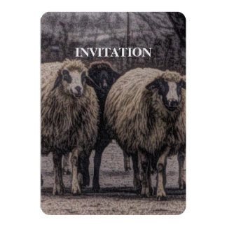 Rustic country road ranch farm herd of sheep card