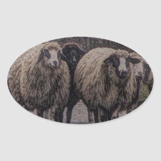 Rustic country road ranch farm herd of sheep oval sticker