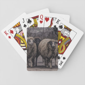 Rustic country road ranch farm herd of sheep playing cards