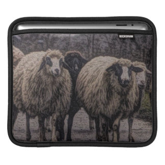 Rustic country road ranch farm herd of sheep sleeve for iPads