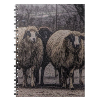 Rustic country road ranch farm herd of sheep spiral notebook