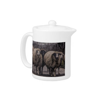 Rustic country road ranch farm herd of sheep teapot