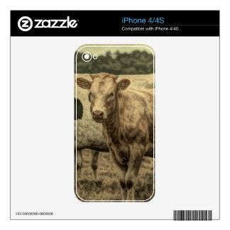 Rustic Dairy Farm Animal Brown Swiss Cow Skin For iPhone 4