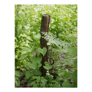 Rustic Fence Post A Poster
