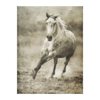Rustic Galloping Andalusian Horse Gallery Wrapped Canvas