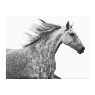 Rustic Galloping Andalusian Horse Canvas Print
