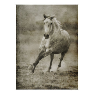 Rustic Galloping Andalusian Horse Poster