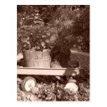 Rustic Garden Lifescape Postcards