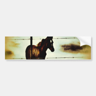 Rustic Horse Colt Foal and Barbed Wire Bumper Sticker